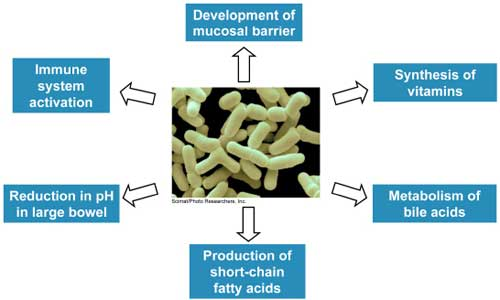 Probiotic Effects in the Body