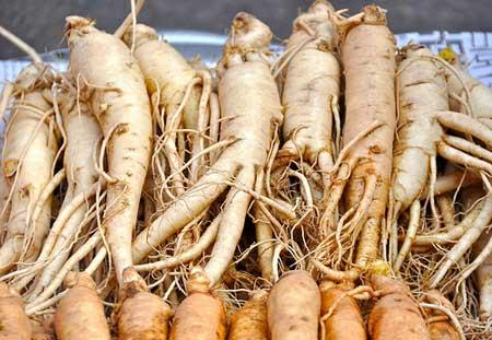 http://www.healthyfellow.com/images/2009/06/ginseng.jpg