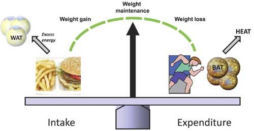 Exercise Chart For Men
