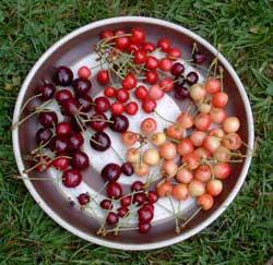 Cherries Promote Good Health