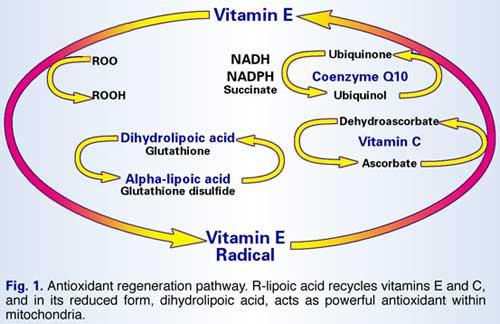 Lipoic Acid and Aging