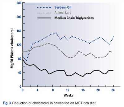 MCTs and Cholesterol